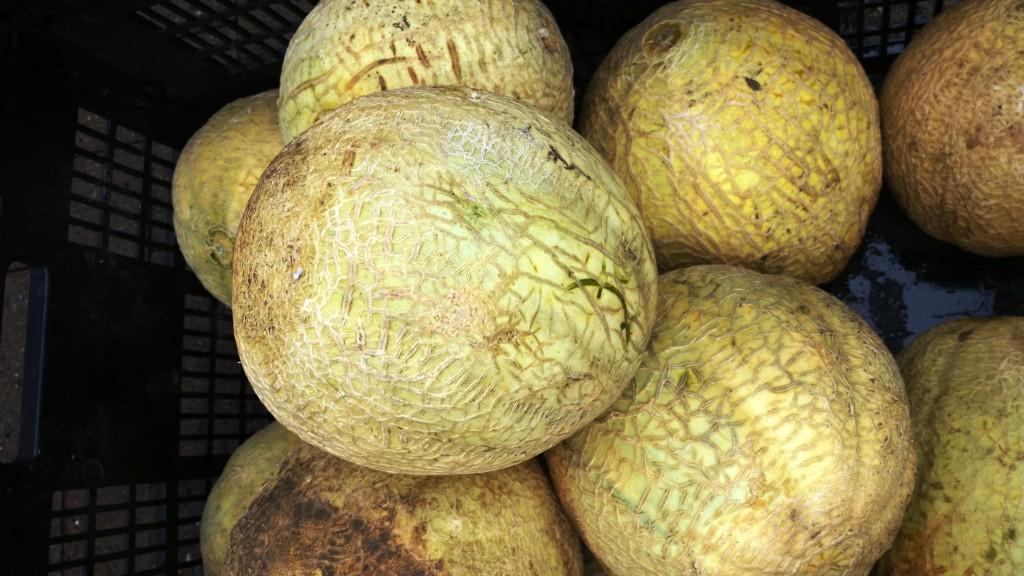 SLU melons