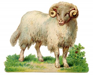 wood sheep