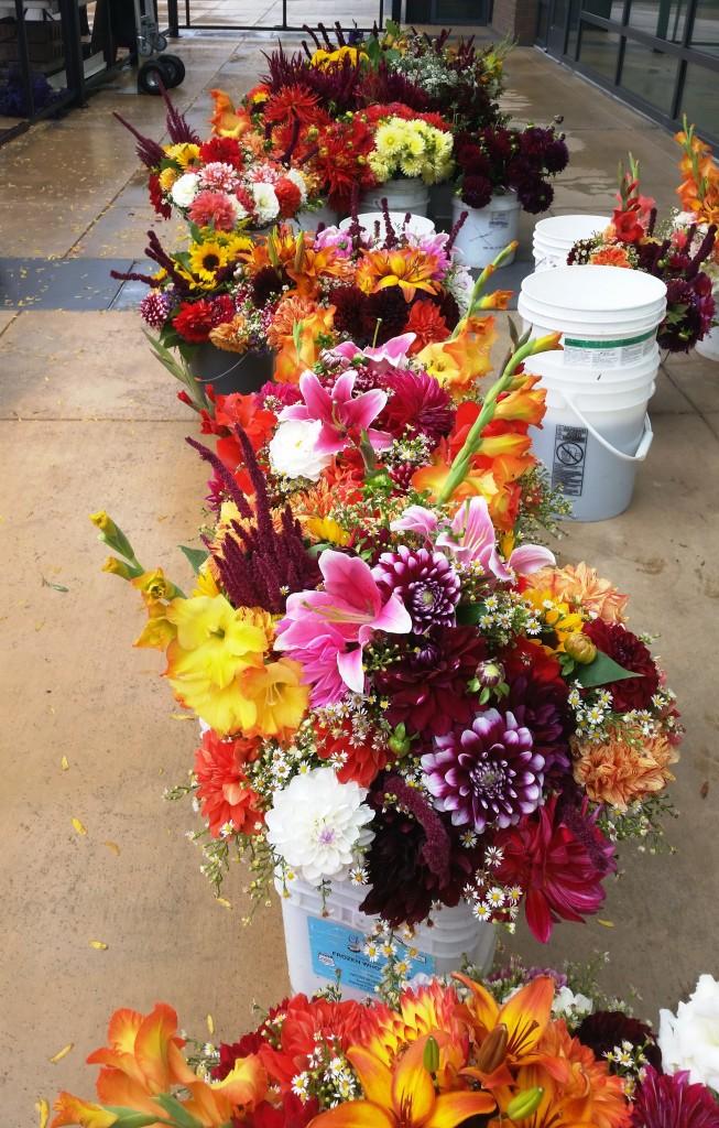 SLU flowers 04