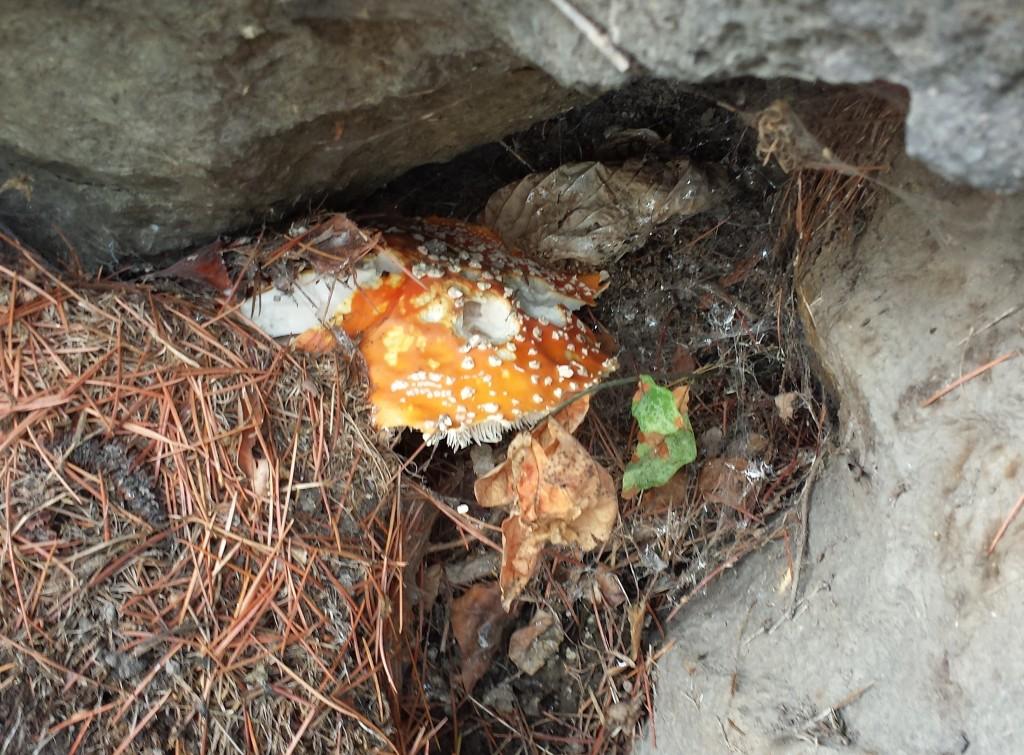 schrooms6